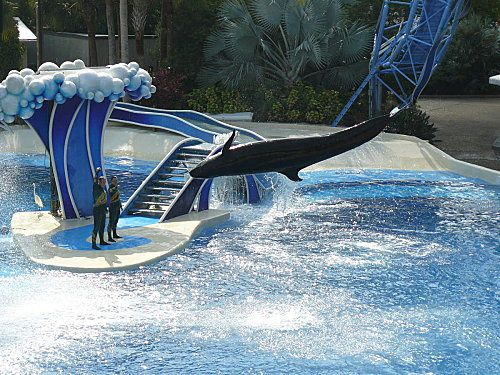Sea-World---Orlando--13-.jpg