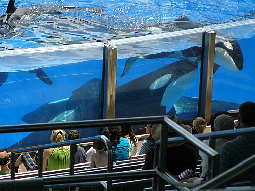 Sea-World---Orlando--16-.jpg
