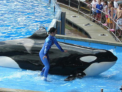 Sea-World---Orlando--17-.jpg