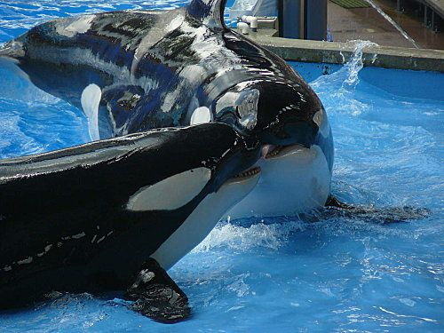 Sea-World---Orlando--18-.jpg