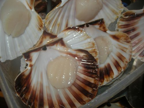 Coquilles-St-jacques---17-.JPG
