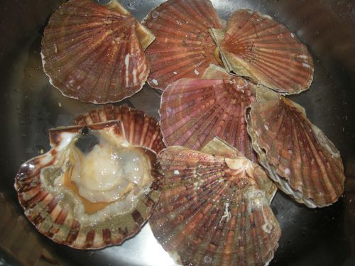 Coquilles-St-jacques---2-.JPG