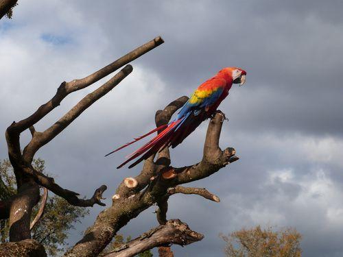 zoo de pessac 3