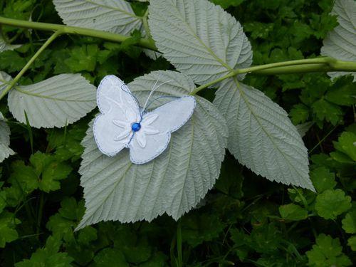 2269-papillon.jpg
