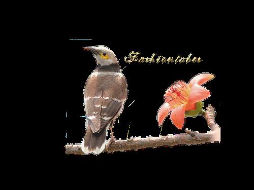 oiseau-sur-la-branche.png