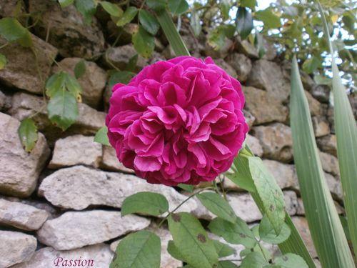 jardin fin aout 2011 002