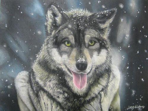 wolf in winter by chalkycanvas-d53f46w