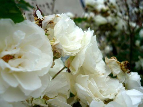 robe ete fleurs 06