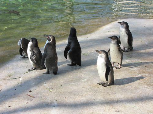 Zoo de Beauval.Acbx41.JP (2)