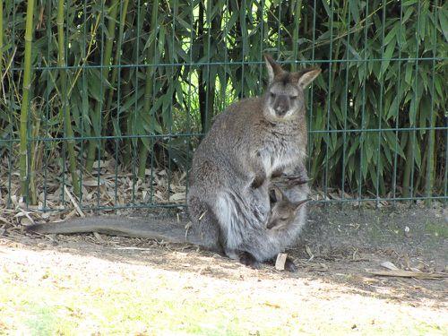 Zoo de Beauval.Acbx41.JP (26)