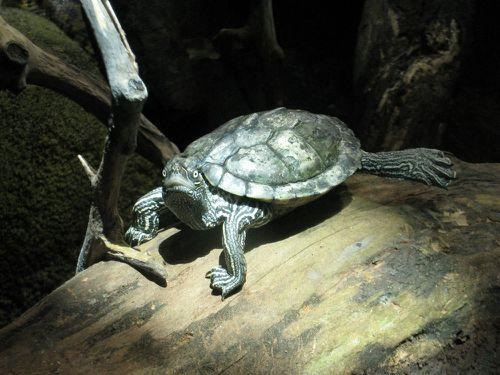 Zoo de Beauval.Acbx41.JP (60)