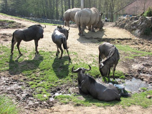 Zoo de Beauval.Acbx41.JP (7)
