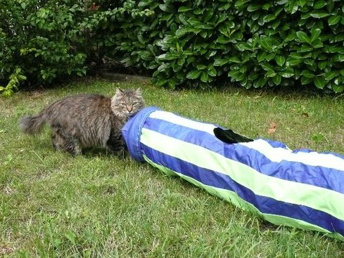 tunnel-pour-chats-07.JPG