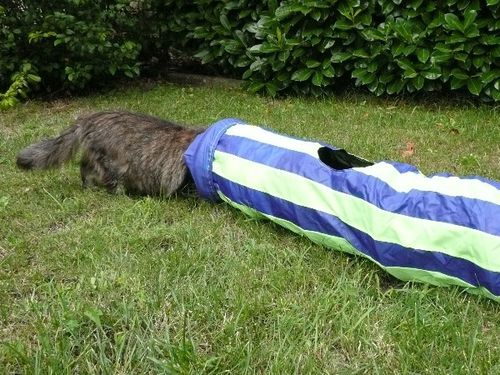 tunnel-pour-chats-08.JPG