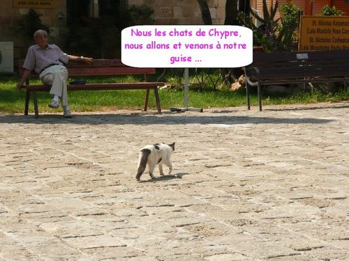 famagouste_cathedrale-St-Nicolas_chat.JPG