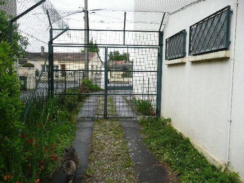 jardin-securise-pour-les-chats-6.JPG