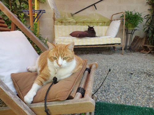 9.05.2011-kouki-pitou-relax.JPG