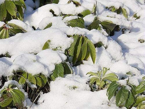 froid-gelee-plantes-hiver