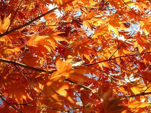 automne-auteur-tracy-libre.jpg