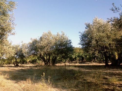 Photo0745-copie-1.jpg