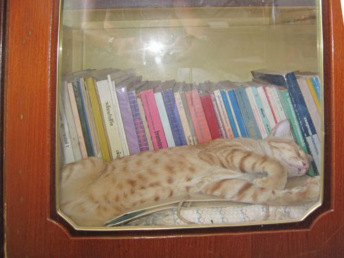 dans-la-bibliotheque_01.jpg