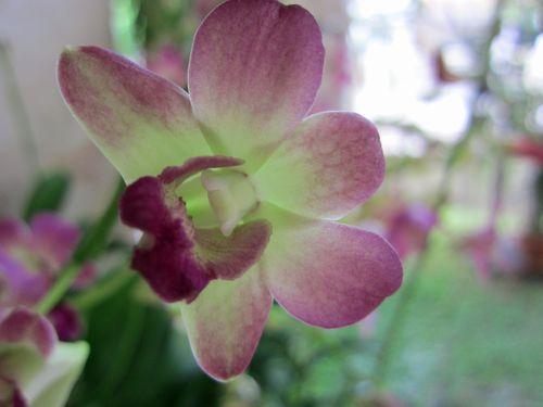 Fleurs et orchidées 05