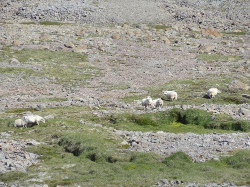 Jour 8 - Point de vue sur les mousses des Fjords d-copie-1
