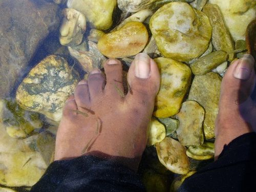 Article about fish pedicure for Fish pedicures illegal in 14 states
