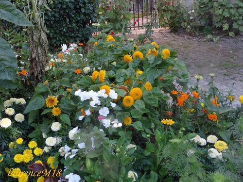 fleurs-multi-couleurs.jpg