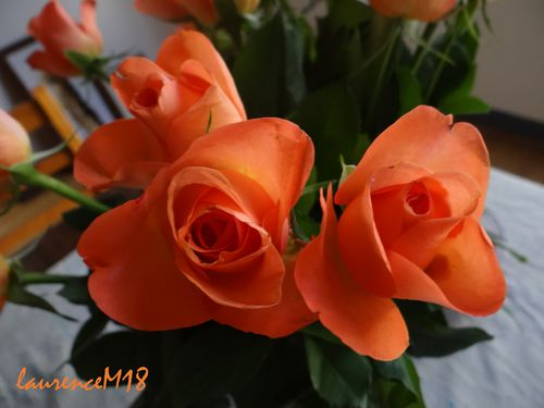 roses oranges-copie-1