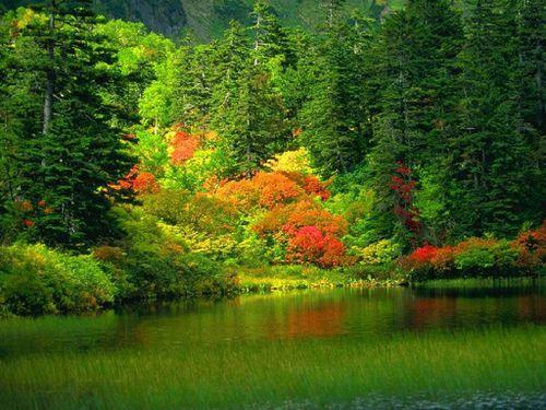 automne-fond-ecran-foret-riviere.jpg