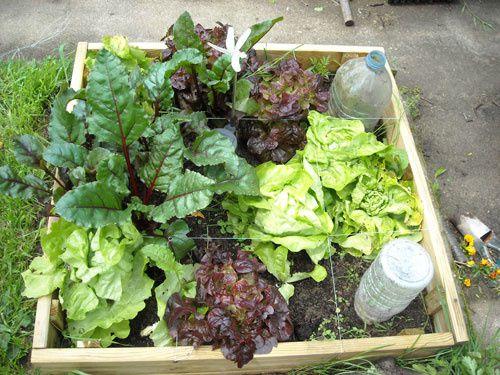 Jardipot mon jardin en ville mon jardin potager en - Comment faire fuir les taupes de mon jardin ...