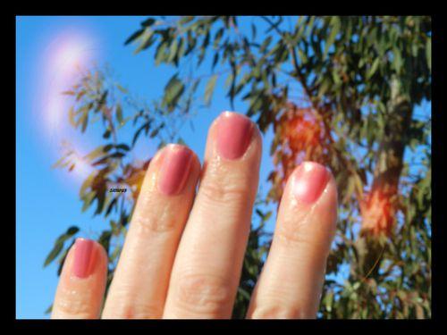rose-douceur10.jpg