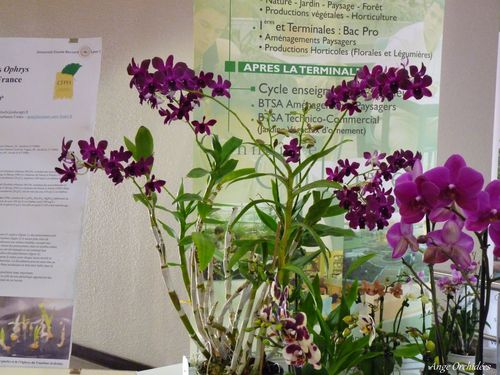 Expo-orchidees-Ecully-2012--2-.JPG