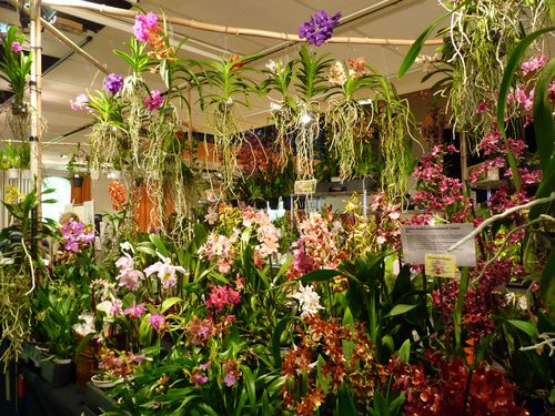 Expo-orchidees-Ecully-2012--31-.JPG