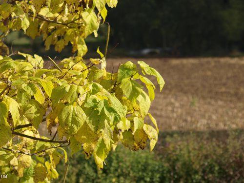 na'automne2