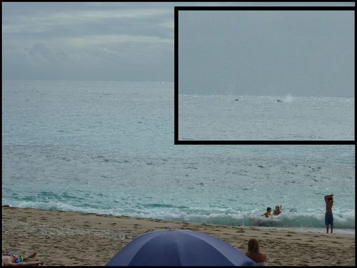 BALEINES A BOUCAN 20100828 02 MONTAGE B