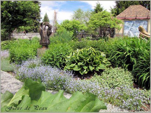 saison-2011-myosotis en floraison