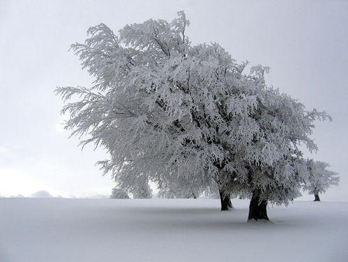 hiver-wikimedia.jpg