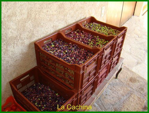 olives-caisse-.JPG