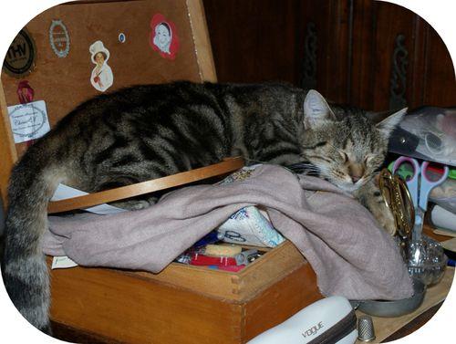 chat-dans-boite-a-ouvrage--2-.JPG