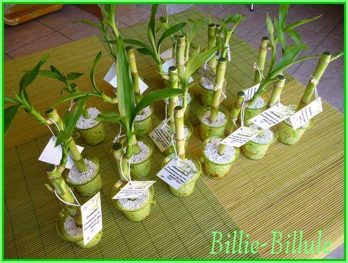 bambou3.jpg