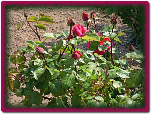 jardin-17-4-2011-1.JPG