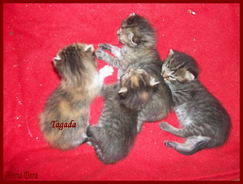 chatons-15-jours-016.jpg