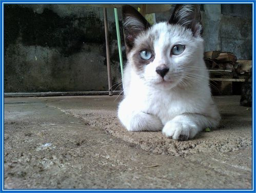 Lulu (5)