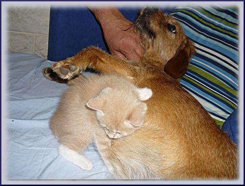 chien et chats 3