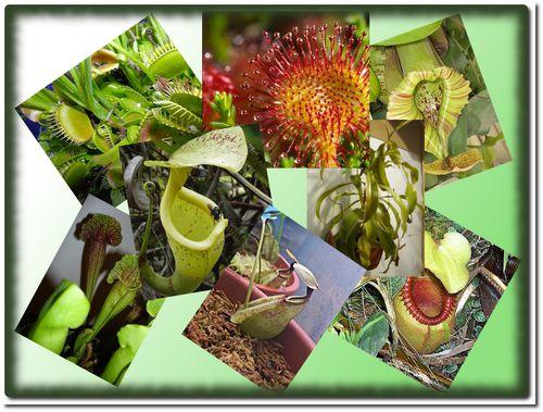 montage-plantes-carnivores.jpg