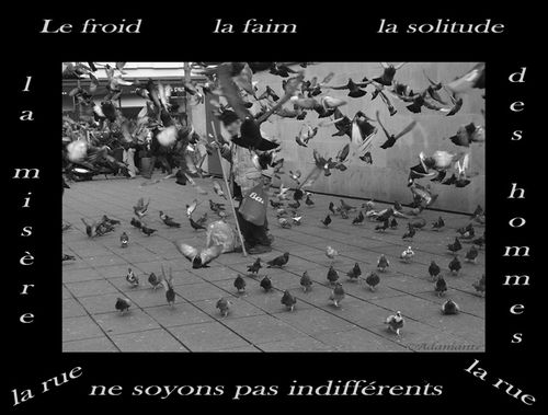 homme-pigeons-fd