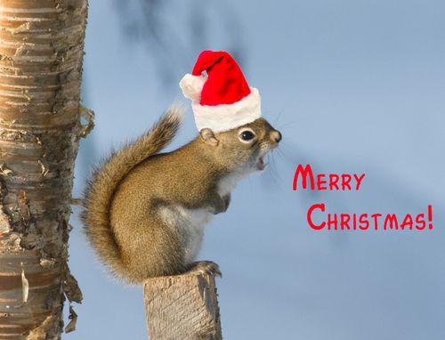 christmas-squirrel.jpg