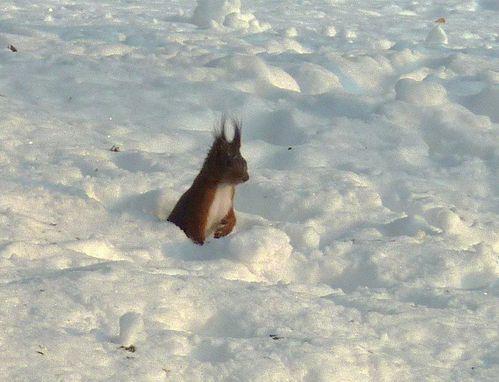 ecureuil - Copie